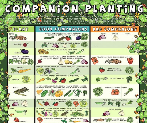 Companion-planting-reference-guide